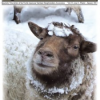 Thumbnail image for Winter 2013 NASSA News