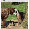 Thumbnail image for Fall 2014 NASSA News
