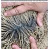 Thumbnail image for Winter 2017 NASSA News