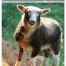 Thumbnail image for Spring 2018 NASSA News