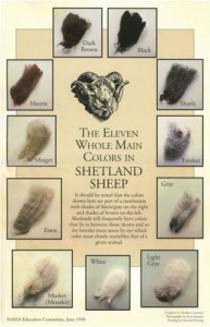 Shetland Fleece Colors Chart