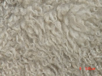 Single-Coated Fleece