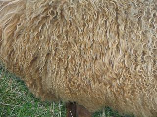 Long/Wavy Fleece