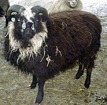 Smirslet Bielset Ram