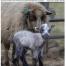 Thumbnail image for Summer 2014 NASSA News