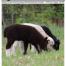 Thumbnail image for Summer 2015 NASSA News