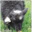 Thumbnail image for Spring 2017 NASSA News